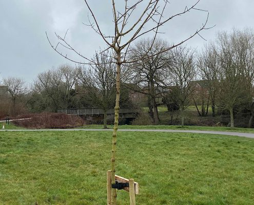 Broughton and Middleton Tree Planting 6