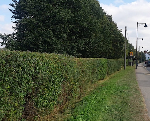 Hedge Trimming in September